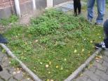 Debajo de estas ortigas está el sitio donde se suicidó