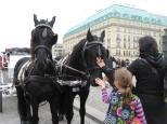 Horse atraction