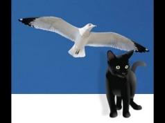 gaviota-y-gato